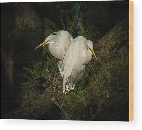 Two Of Hearts Egret Pair - Wood Print