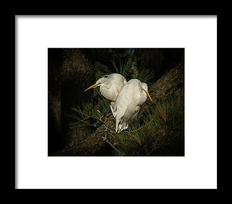 Two Of Hearts Egret Pair - Framed Print