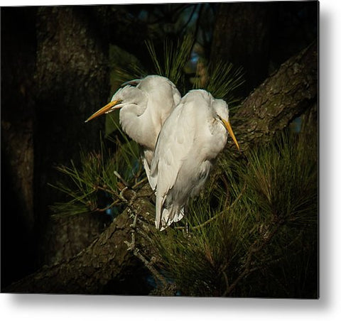 Two Of Hearts Egret Pair - Metal Print
