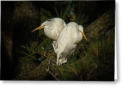 Two Of Hearts Egret Pair - Greeting Card