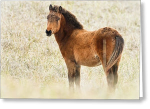 Wild Foal In The Dunes Of Obx - Greeting Card