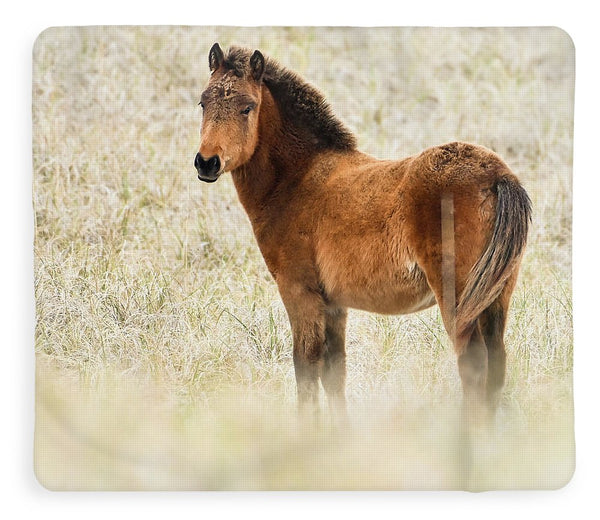 Wild Foal In The Dunes Of Obx - Blanket