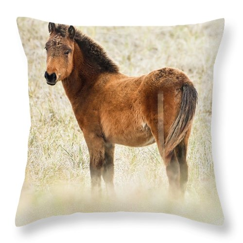Wild Foal In The Dunes Of Obx - Throw Pillow