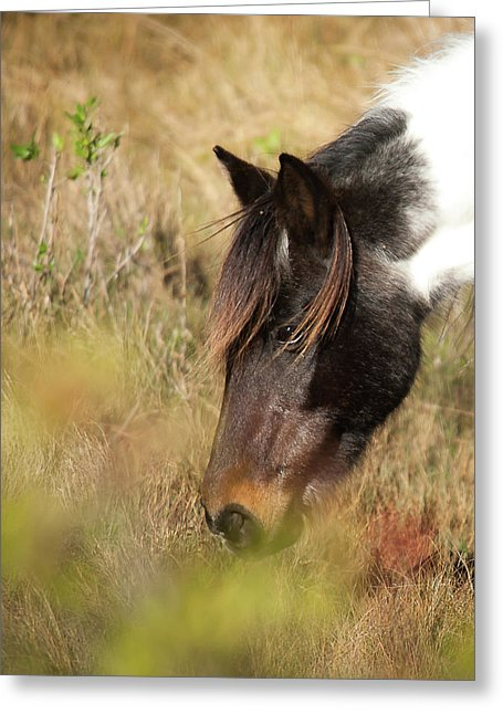 Wild Horse Grazing - Greeting Card