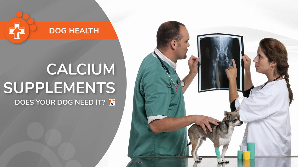 Sources of Calcium For Dogs - Requirements and Balance