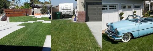 3 yards of grass growing through Drivable Grass in driveway