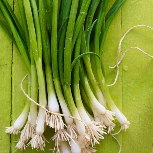 Bunching Onion Parade – Organic