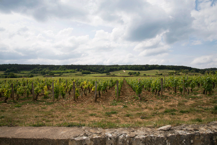 Edges of Burgundy: Our New Blog Series