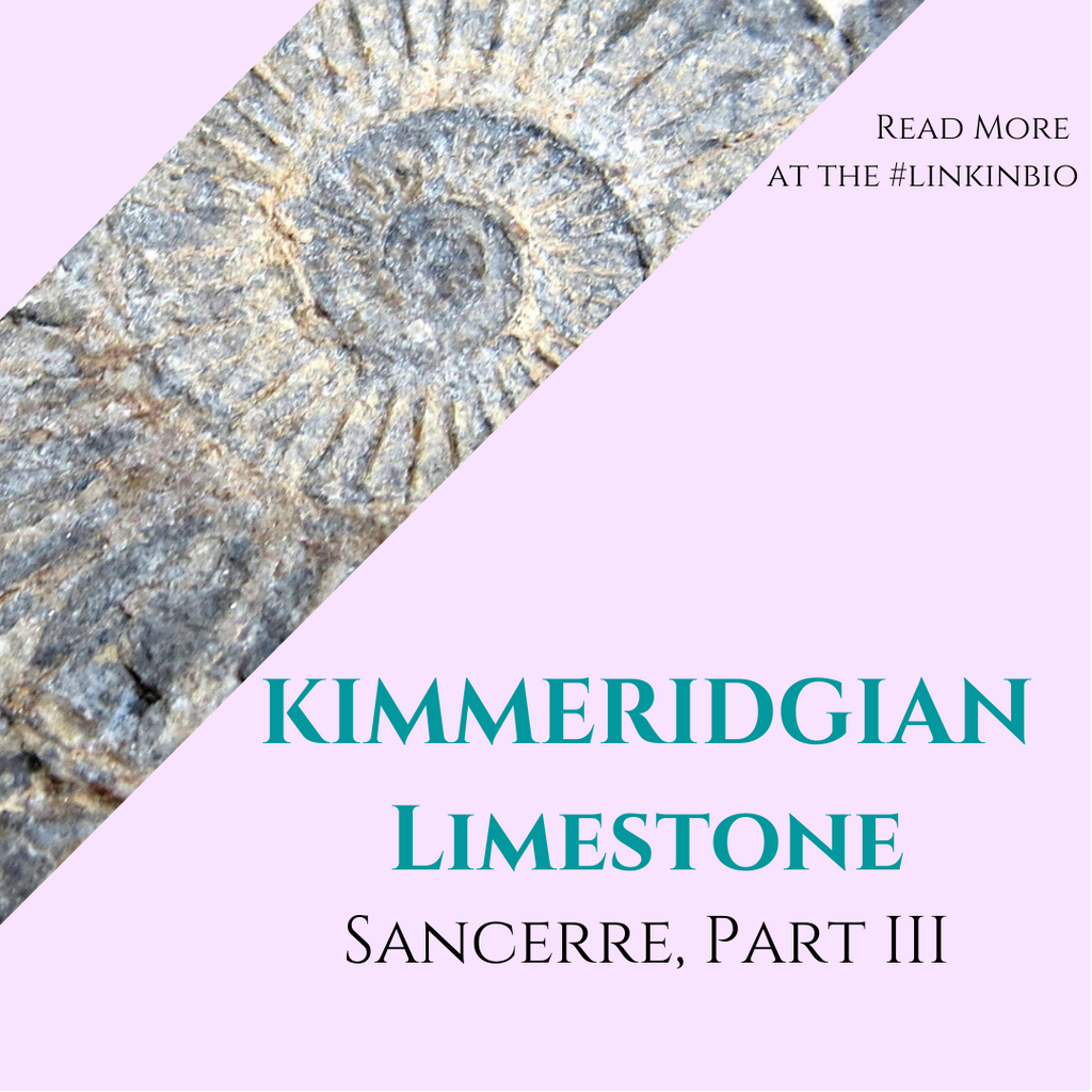 The Ultimate Guide to Sancerre, Part 3: Kimmeridgian Limestone