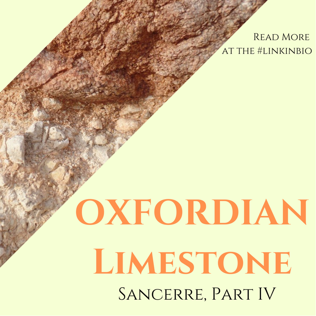 The Ultimate Guide to the Terroir of Sancerre, Part 4: Oxfordian Limestone