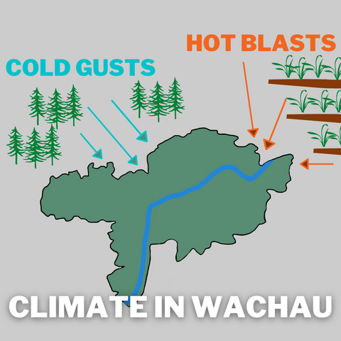 Climate in the Wachau WInd Graphic