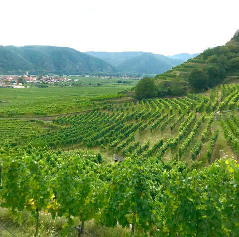Vineyards in Wachau