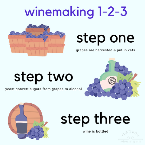 Wine Making How To Infographic