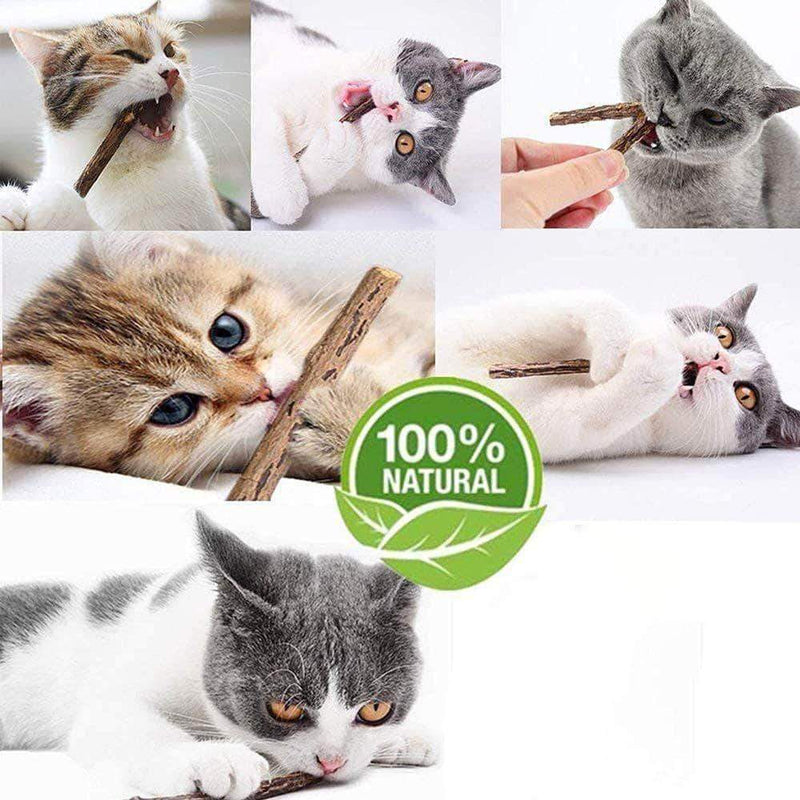 Jozzby Natural Catnip for Cats | Molar Toothpaste Branch Stick for Teeth Cleaning Silvervine - Ooala