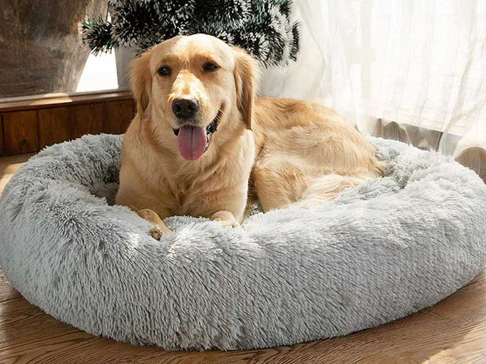 5 Things to Consider While Choosing Your Dog's Bedding
