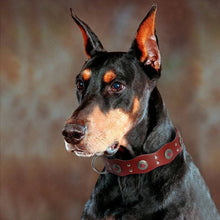 Load image into Gallery viewer, Durable Genuine Leather Dog Collar Handmade - Dog Nation