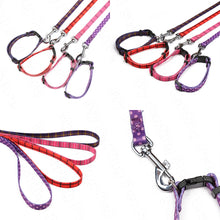 Load image into Gallery viewer, Leash & Collar Set - Dog Nation