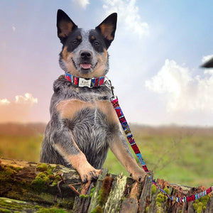 Attractive Personalised Nylon Dog Collar & Leash Set - Dog Nation