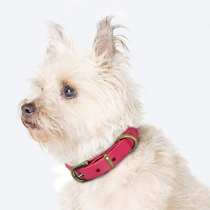 Genuine Leather Dog Collar Adjustable - Dog Nation