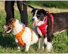 Load image into Gallery viewer, Comfortable Reflective No Pull Dog Harness - Dog Nation