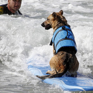 Life Jacket for Dogs - Dog Nation