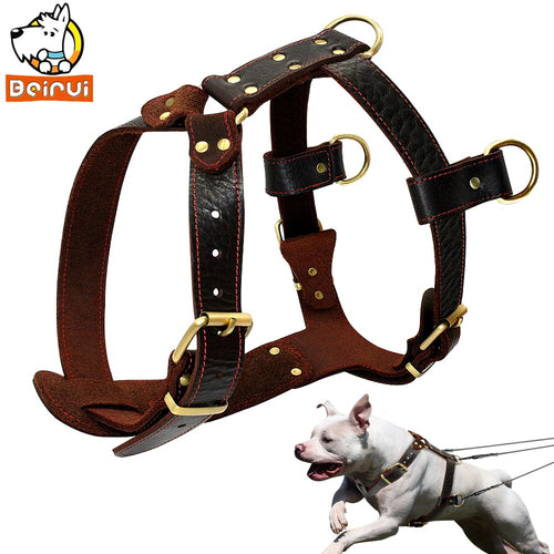Genuine Leather Dog Harness - Dog Nation