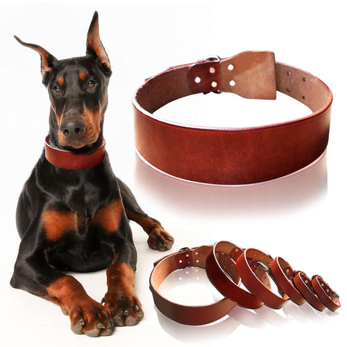 Top Quality Genuine Leather Dog Collar - Dog Nation