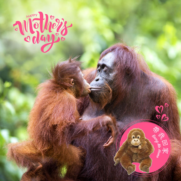 Bring Me Home - Orangutan Parent & kid |  帶我回家 - 親子紅毛猩猩