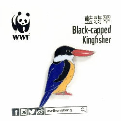 Mai Po Bird Pin - Black-capped Kingfisher | 米埔雀鳥 - 藍翡翠