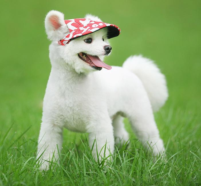 TailUp™ Machiko Dog Hat
