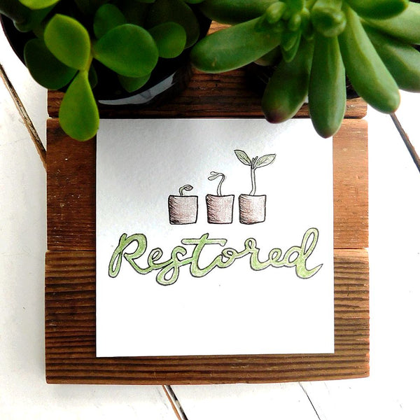 Restored, Identity in Christ, succulents
