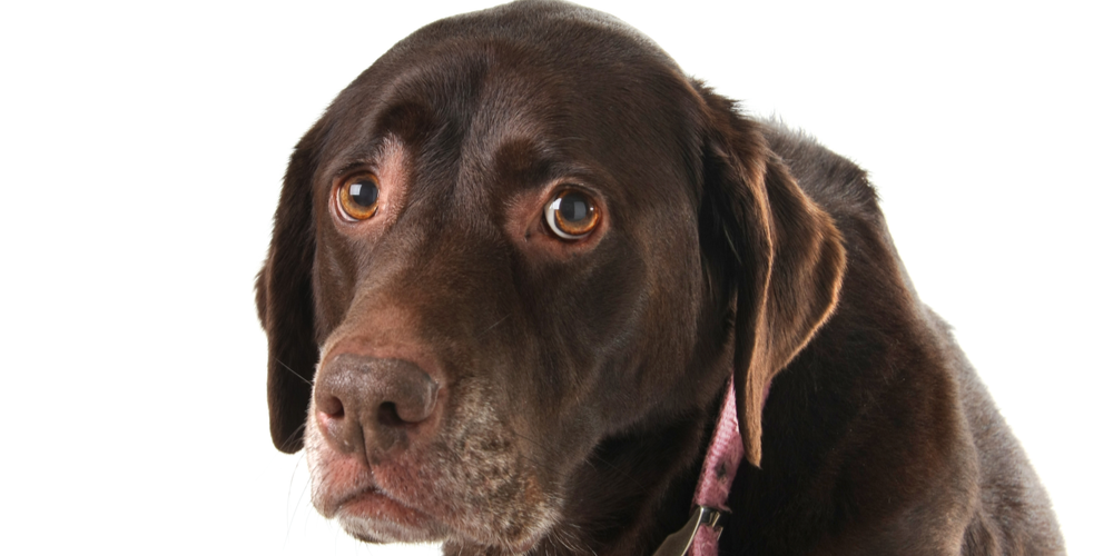 5 Signs Your Dog Suffers From Anxiety