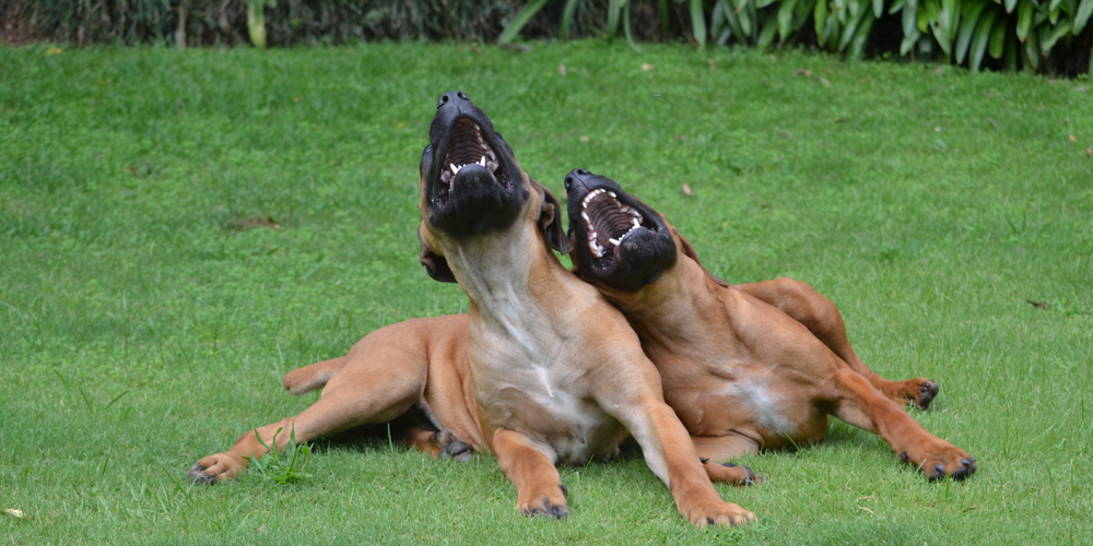 Are Dogs Ticklish?