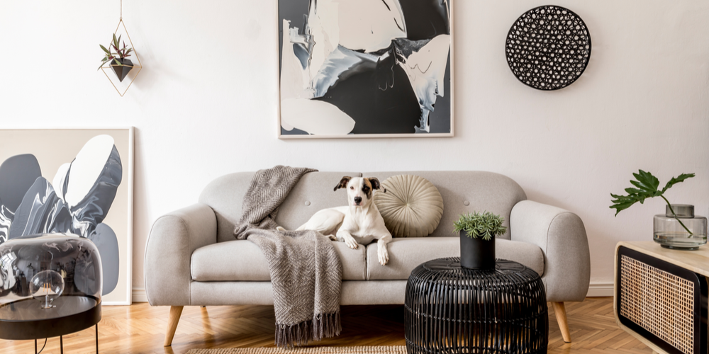 How To Pick The Best Apartment Dog