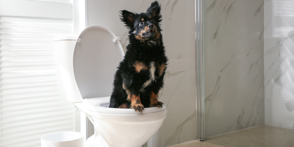 Best Way To Potty Train Your Dog