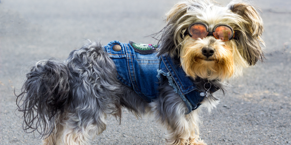 Benefits And Disadvantages Of Dressing Up Your Pet