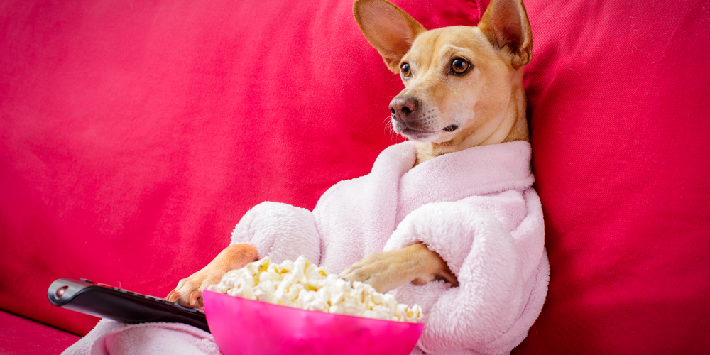 Can Dogs Understand What is Happening in Movies?