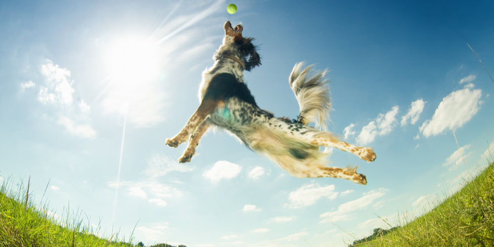 Can Your Dog Exercise Too Much?