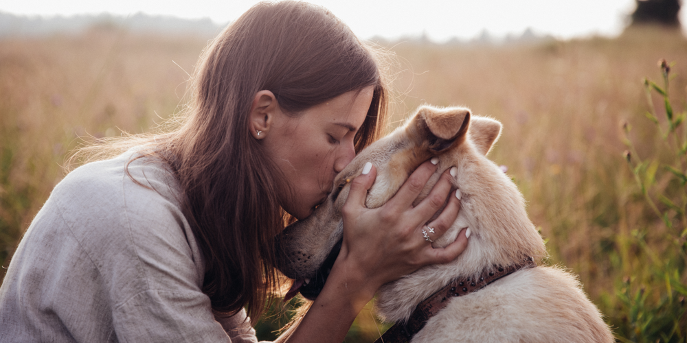How Can Dogs Sense What Is Going To Happen To Their Owner?