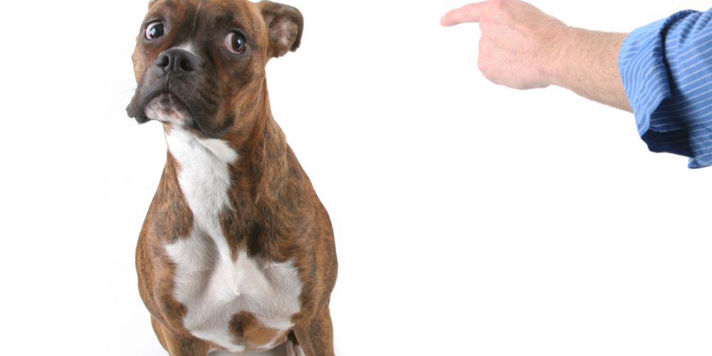 Can Dogs Understand Languages?
