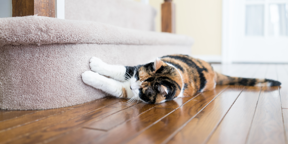 Tips For New Cat Owner
