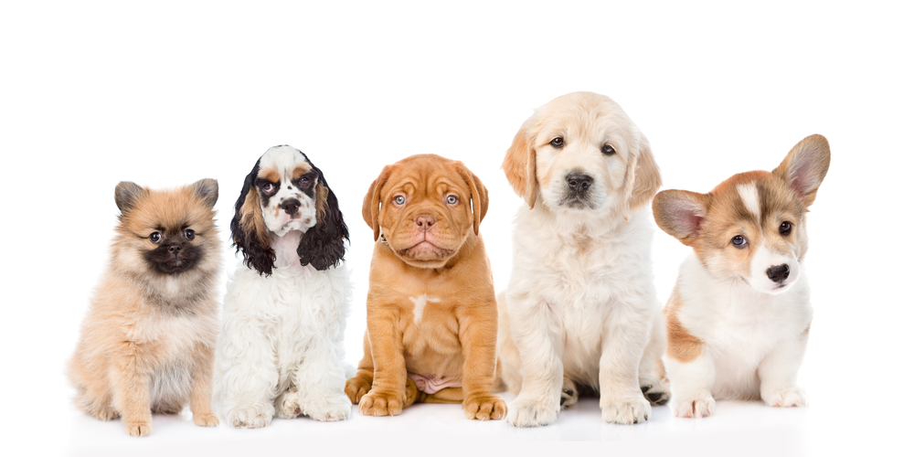 Top 10 Puppy Names Of 2020