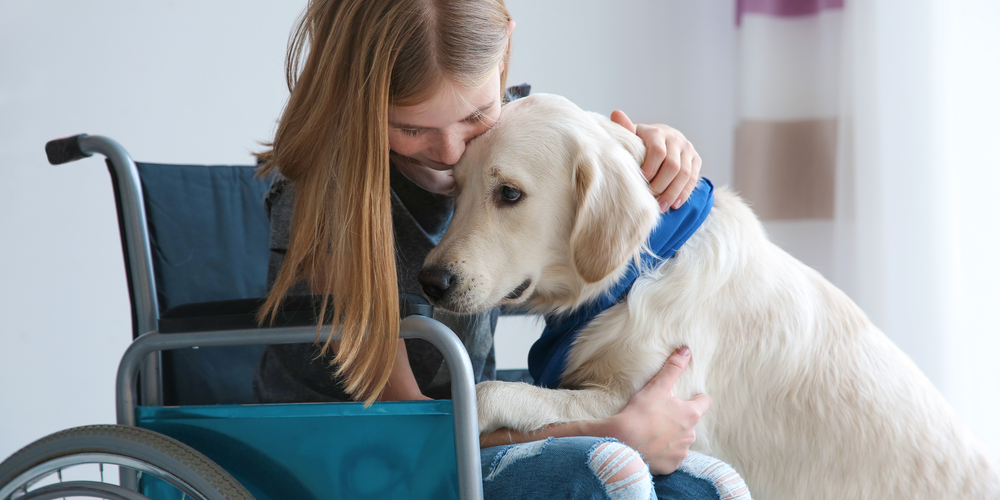 Why Do Dogs Make Great Service Animals?
