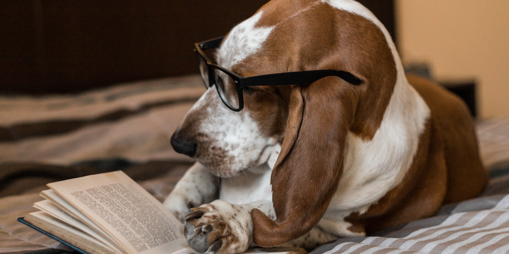 Can Dogs Read?