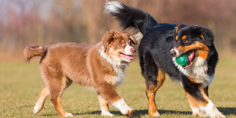 Can Dogs Talk To Each Other?