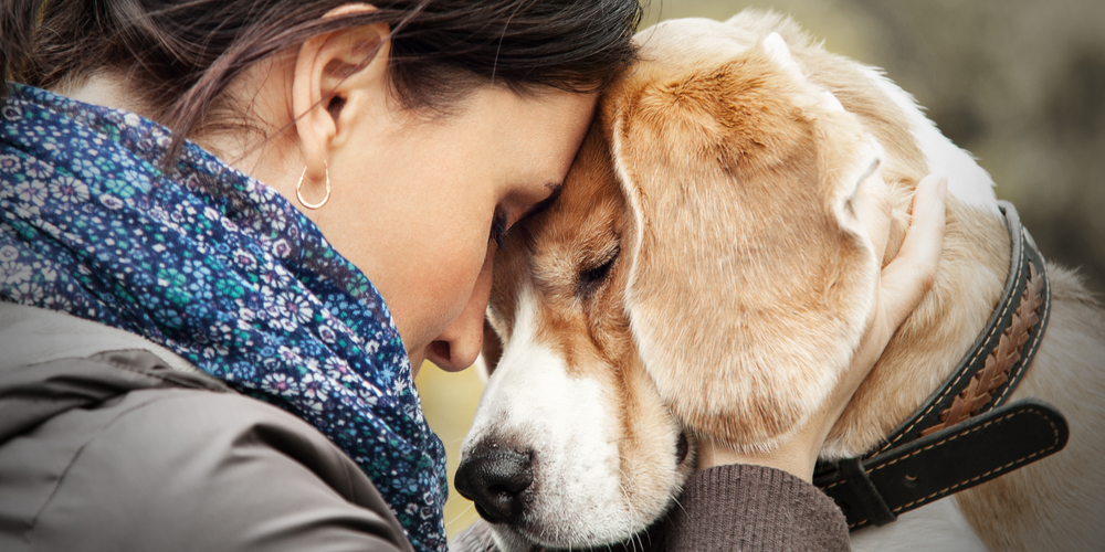 Can Dogs Tell When You're Sad?