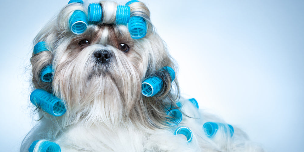 How Do You Know If Your Dog Is Grooming His Self Properly?