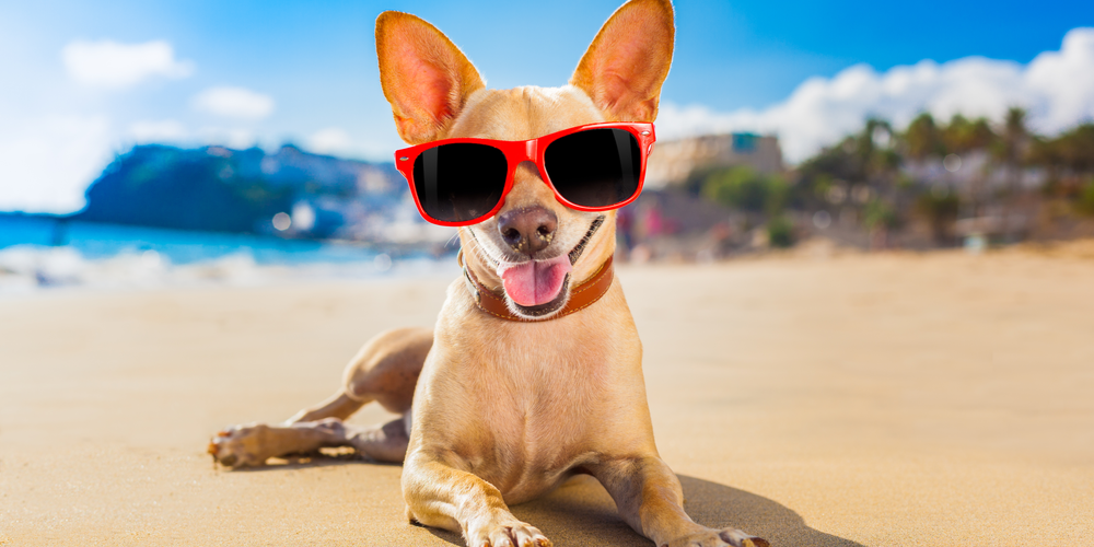 Should Your Dog Wear Sunglasses In Summer?
