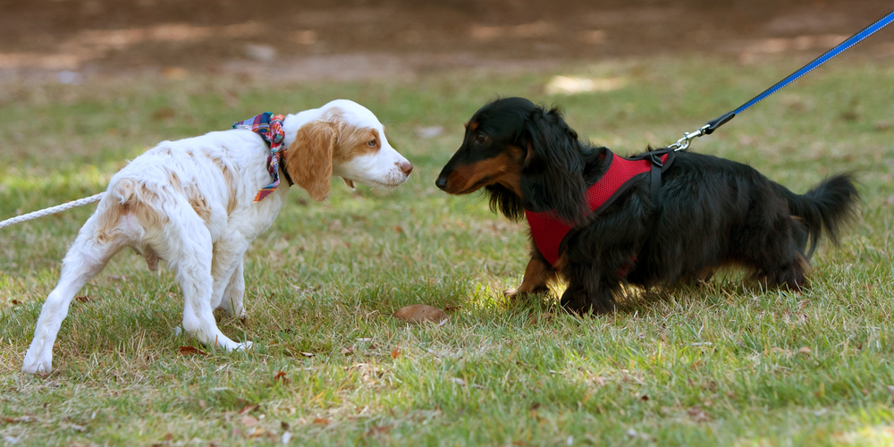 Sniff Sniff...Here's Why Dogs Sniff Butts!