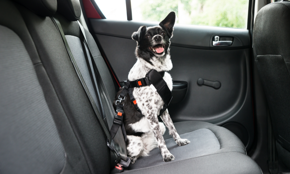 Would you drive without putting a seatbelt on your child? What about your dog?